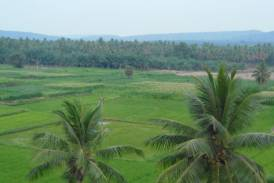 Galleria The Purchase of Agricultural Land – the Pond for fish farming